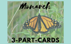 Monarch Butterfly 3-part Cards Printable Free