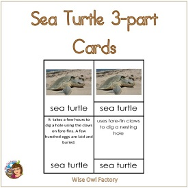 Sea Turtle 3-part Cards