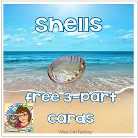 Shells 3 Part Cards