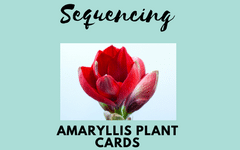 Amaryllis Plants for Fun Measurement Project and Free Sequencing Cards Printable PDF