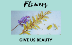 Flowers Give Us Beauty Thoughts for Children and Free PDF