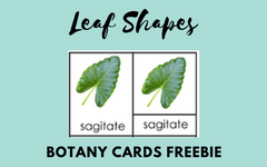 leaf-shapes-botany-cards-freebie