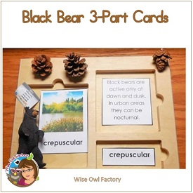 Black Bear 3-part Cards