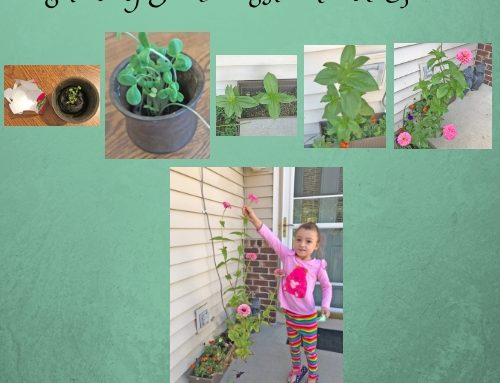 Planting Seeds to Bloom and Grow Free Journal