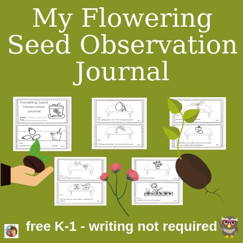 plant growth observation journal