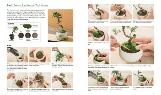 How To Grow Super Miniature Bonsai