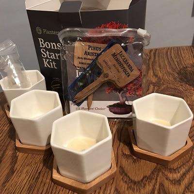 Super Miniature Bonsai Pot Landscaping