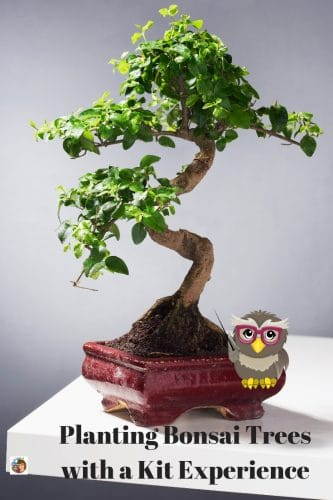 Planting-Bonsai-Trees-with-a-Kit-Experience-info-post