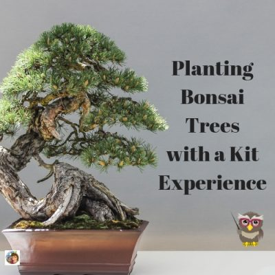Planting-Bonsai-Trees-with-a-Kit-Experience-informational-post
