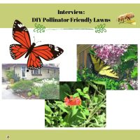 DIY-pollinator-friendly-lawns-interview-with-homeowner