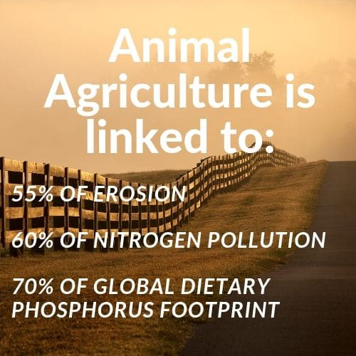 animal-agriculture-linked-to-erosion-pollution-and-phosphorus-footprint