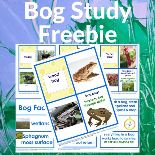 Bog Study Matching Cards and Vocabulary Free PDF