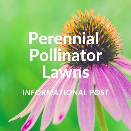 DIY Pollinator Friendly Lawn Interview with Homeowner
