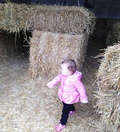 hay-maze-at-the-farm