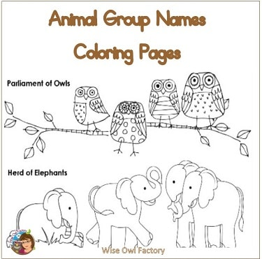Animal Group Names Coloring Pages Freebie