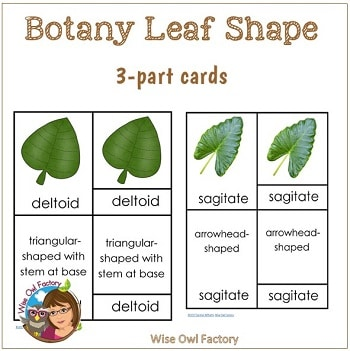 botany-leaf-shape-3-part-cards-Montessori