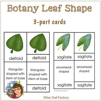 botany-leaf-shape-3-part-cards-Montessori