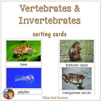 invertebrates-vertebrates-sorting-cards-free-science-PDF