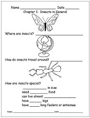 BUZZ-a-book-about-insects-nonfiction-work-pages-freebie