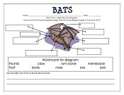 free-bats-by-Gail-Gibbons-work-page-and-key-sm
