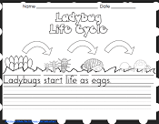 lady-bug-life-cycle