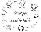 orange-life-cycle-free-printable