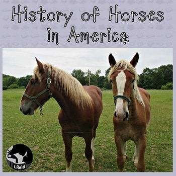 history-of-horses-in-America-post-with-graphing-activity-fpr-Pre-K-and-up-by-I-Reid