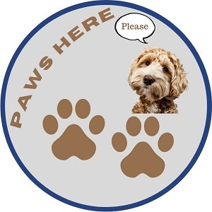 pause-paws-here-please-social-distancing-classroom-dog-paws